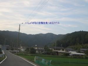 IMG_1530